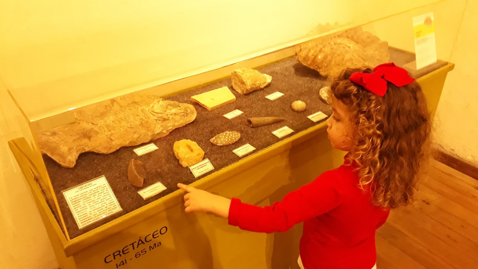 Sala de História Natural - Museu da Ciência e da Técnica UFOP