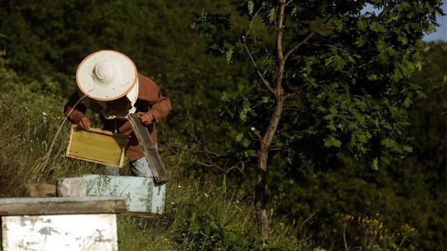 Μάνη: Τραγικό τέλος για 75χρονο – Έσπασε κυψέλη και του επιτέθηκαν δεκάδες μέλισσες