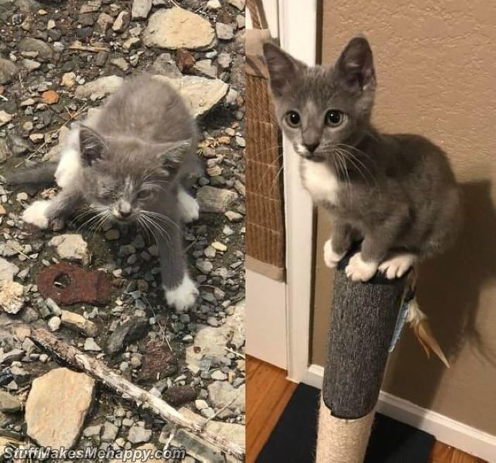 Touching Before And After Pictures Of Rescued Cats and Dogs