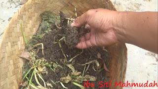 Limbah Panen Sayuran dan Dapur untuk Pakan Budidaya Cacing