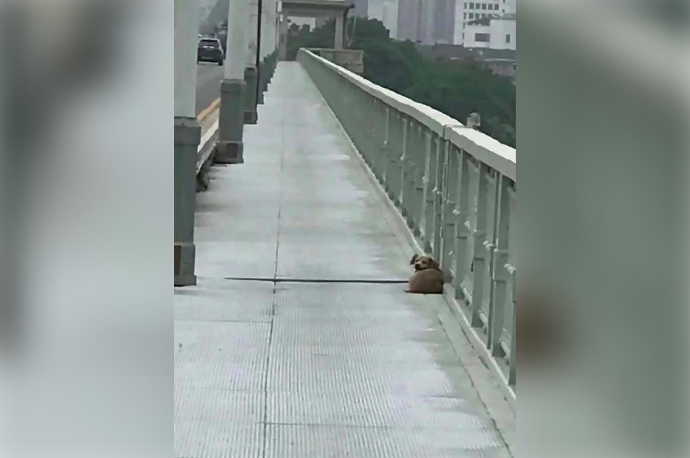 perro-llora-por-su-amo