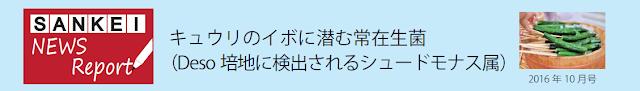 SANKEI NEWS Report 10月号 キュウリのイボに潜む常在生菌(Deso培地に検出されるシュードモナス属)