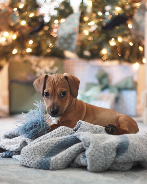 puppy christmas tree
