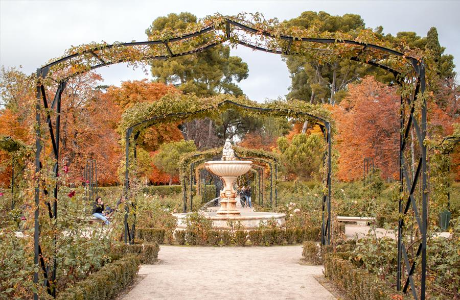madrid parque retiro otoño rosaleda