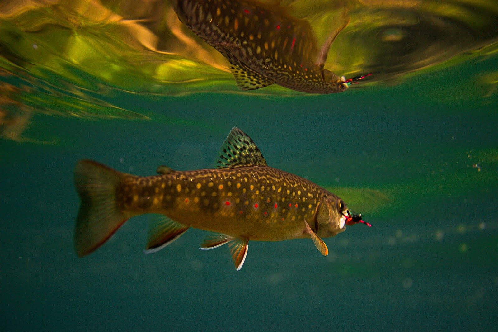 Erik s fly fishing blog little brook trout for Plenty of fish boise
