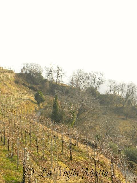 colline di Arfanta