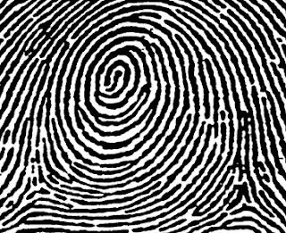 whorl fingerprint pattern