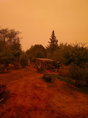 Living in the woods during fire season