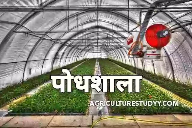 पौधशाला (Plant Nursary in hindi) क्या है इसके लाभ, उद्देश्य व प्रकार एवं उतम पौधशाला तैयार की विधियां