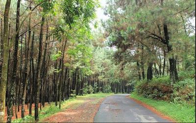 Tempat Wisata Hiking Di Bogor