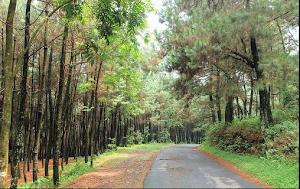 3 Tempat Hiking Di Bogor Keren Yang Wajib Dikunjungi