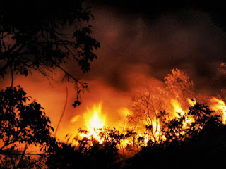 fire-in-uttrakhand-jungle-climate-change