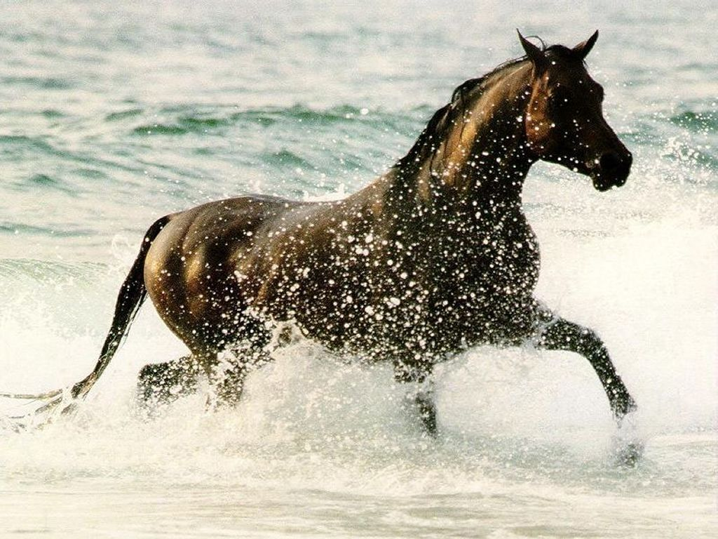 Amazing   Wallpaper Horse Watercolor - Running-Horse-Brown-Wallpaper  Perfect Image Reference_236013.jpg