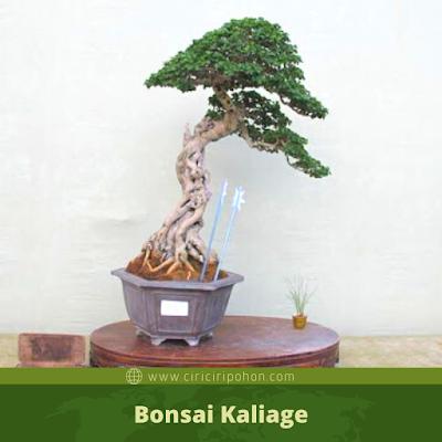Bonsai Kaliage