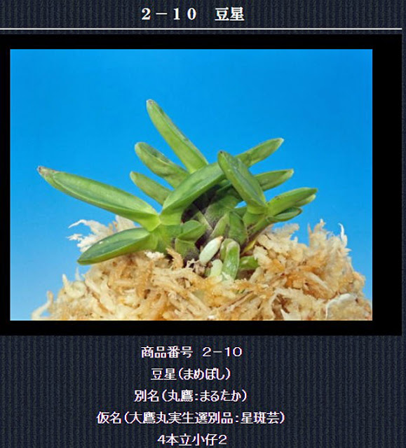 http://www.fuuran.jp/2-10.html