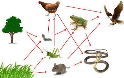 ekosistem sawah