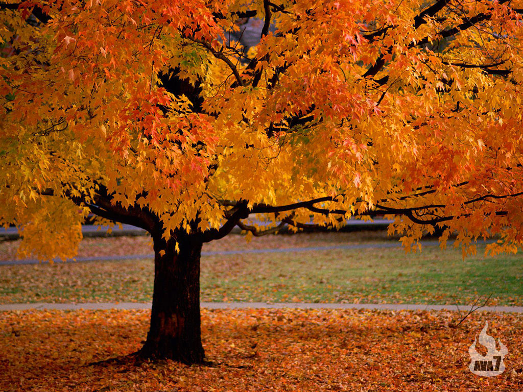 autumn season wallpapers tree beauty amazing fall trees leaves seasons colors nice leaf foliage autum gorgeous stunning god nature september