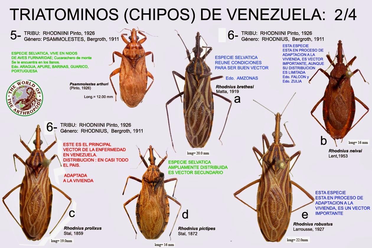 mal de chagas insecto transmisor