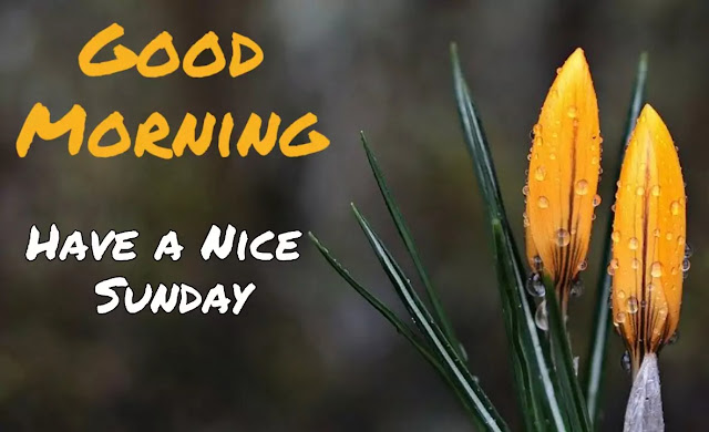 Good morning sunday hd wallpaper 1080p