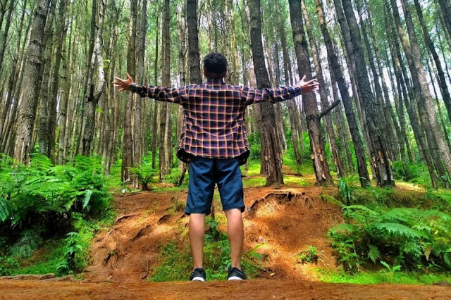 Wisata di Barru Hutan Pinus Lajoanging