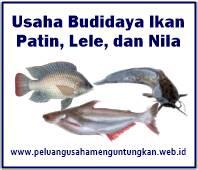Peluang Usaha Budidaya Ikan Patin Ikan Lele Dan Ikan Nila