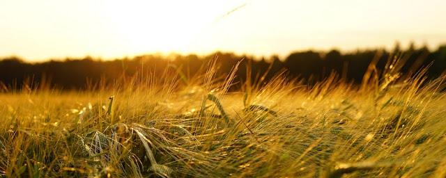 Volviendo a lo natural: logrando ser más productivos sin transgénicos ni agroquímicos