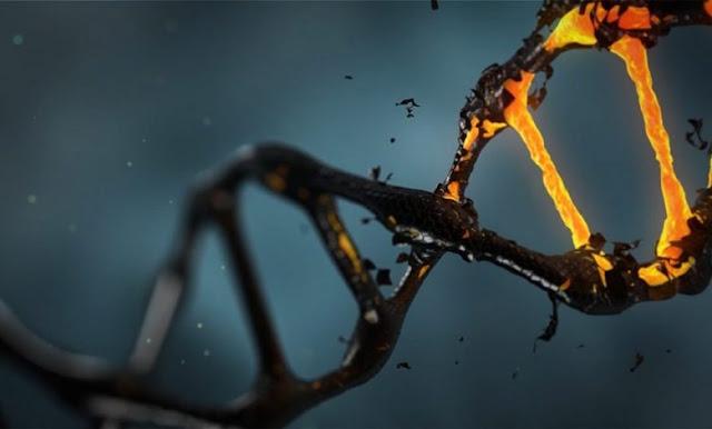 Tất cả loài người là hậu duệ của một cặp đôi đã sống 200.000 năm trước?