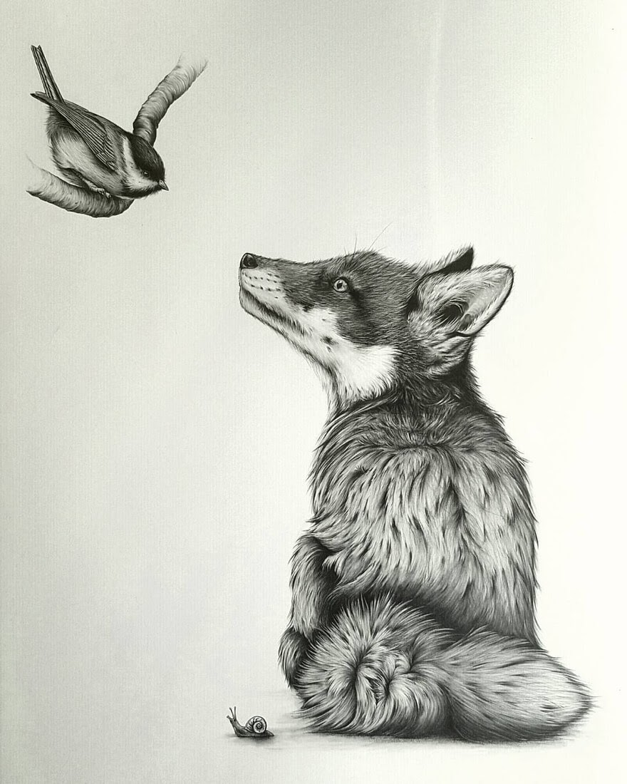 02-Bird-Fox-and-Snail-Kerry-Jane-Detailed-Black-and-White-Wildlife-Drawings-www-designstack-co