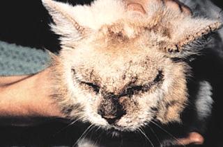 Biaya Suntik Scabies Kucing Terbaru