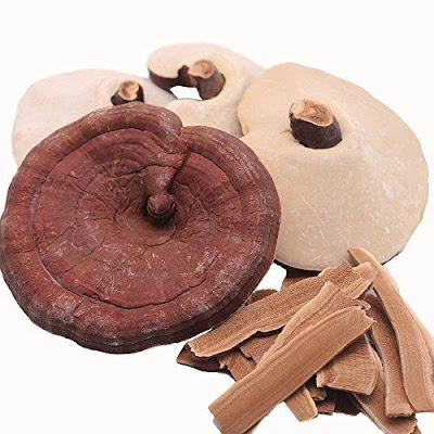 Reishi mushroom training in Aurangabad