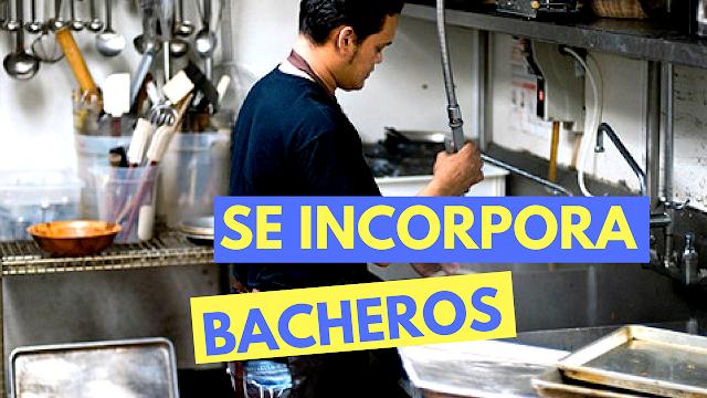 Bachero / Lavandín