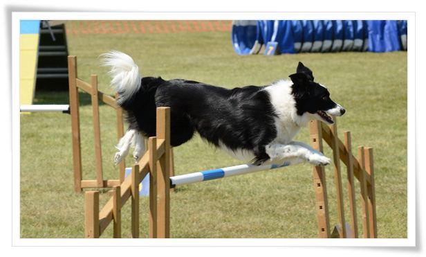 dog agility classes near me