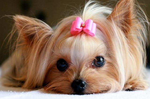 Dog Dry Skin Remedy