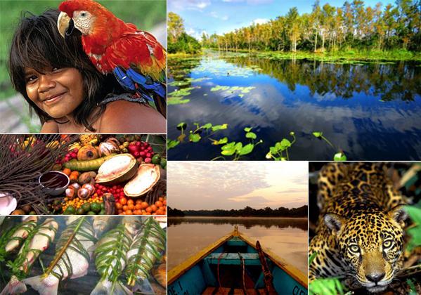 Hileia Amazônica | Floresta com Maior Biodiversidade do Planeta