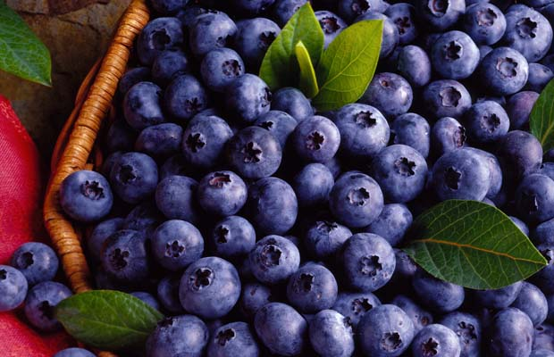 Khasiat Buah Blueberry Untuk Kesehatan