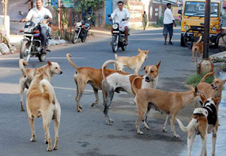 India State Ban the Eat and Import of Dog Meat