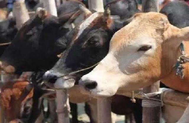 आवारा पशुओं के घूमने पर पालकों के खिलाफ होगी कड़ी कार्यवाही : जैन  - newsonfloor.com