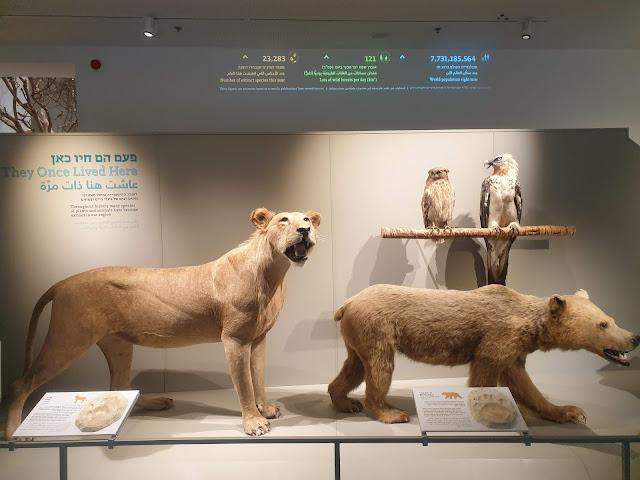 אריה ודוב