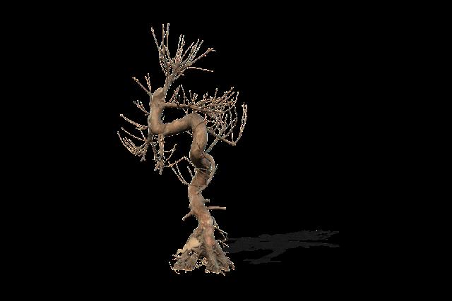 DEATH TREE 005