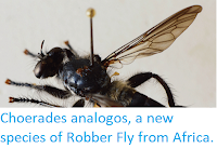 https://sciencythoughts.blogspot.com/2019/02/choerades-analogos-new-species-of.html