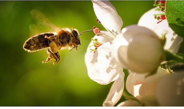 Η μέλισσα και η Χριστιανοσύνη!!!