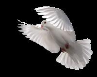 Resultado de imagen de ¿Cómo sé cuál es mi don espiritual?
