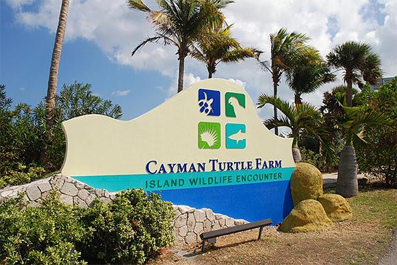 Paul McCartney contre l'élevage des tortues de mer aux Îles Caïmans