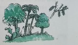 मरुस्थलीय वन
