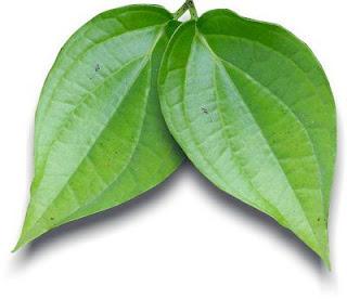 Cara Herbal Menyembuhkan Kencing Nanah menggunakan daun sirih