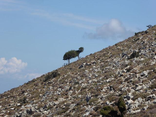 vegetazione monte atavyros