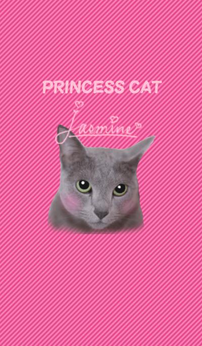 One day of cute cat Jasmine