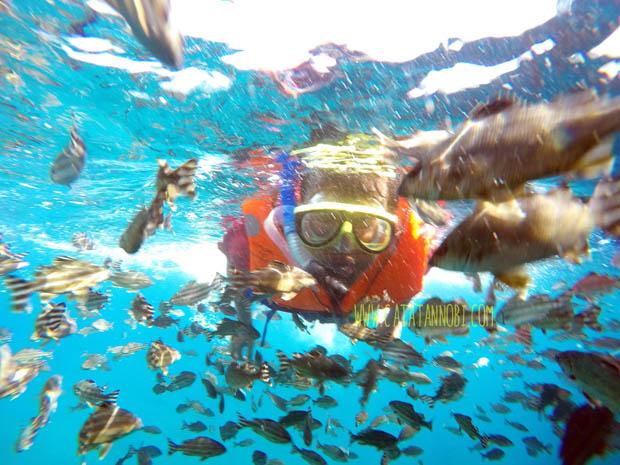 Image result for snorkeling di bangsring banyuwangi