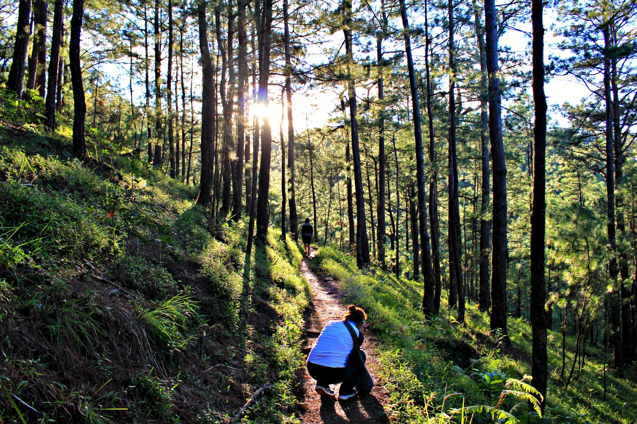 Following the Yellow Trail at Camp John Hay   Baguio - Nomadic Experiences