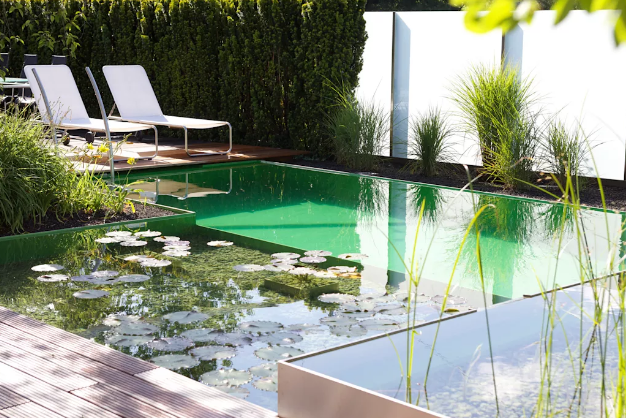 For your swimming pond, we recommend white lotus, Victoria-Regia, lotus, water reed, leather hat, water lettuce or Murray tick.
